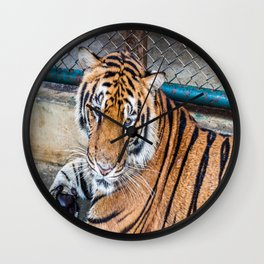 Tiger, My Bottom is Not Made Out of Springs Wall Clock