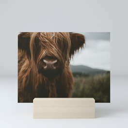 Scottish Highland Cattle Mini Art Print