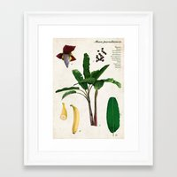 musa Framed Art Prints featuring Musa Paradisiaca by plantage