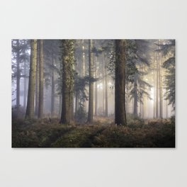 Puddletown Forest Canvas Print