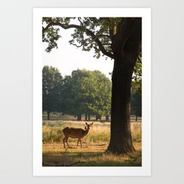 Richmond Park, study 5, 09/2015 Art Print