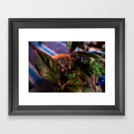 Chinese Evergreen Plant - Red and Green Framed Art Print
