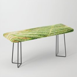 Green Fern Bench