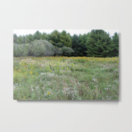 Beautiful View of a Meadow Metal Print