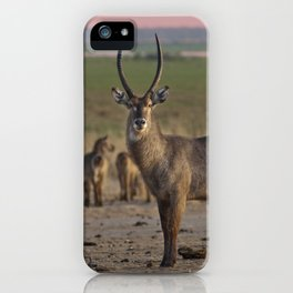 The Waterbuck and his Ladies iPhone Case