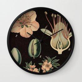 Botanical Almond Wall Clock