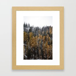 Larches in Snow Framed Art Print