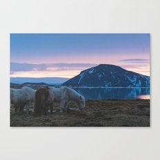 Icelandic Horses and Sunsets Canvas Print