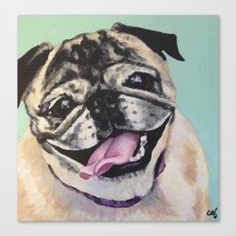 Portrait of Pug on Teal Canvas Print