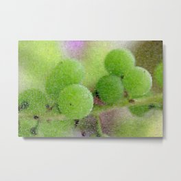 Green Grapes Metal Print