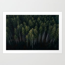 Aerial Photograph of a pine forest in Germany - Landscape Photography Art Print