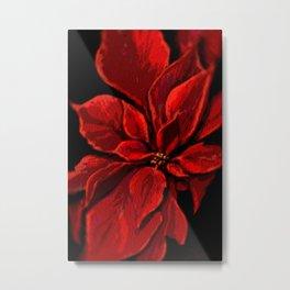 Poinsettia DPPA141225a Metal Print
