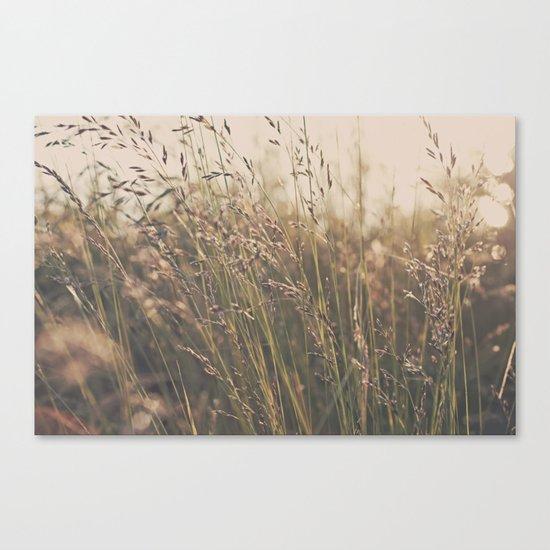 Field in the Sun Canvas Print