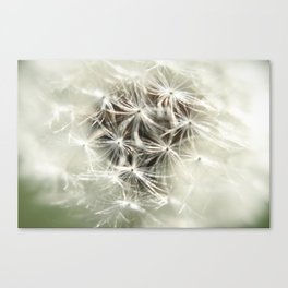 Into the Weed Canvas Print