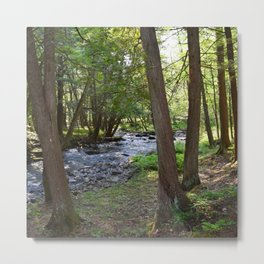 Photo 27 Forest Metal Print