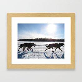 Sled Dogs Framed Art Print