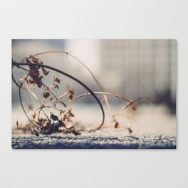 Winter Effects Canvas Print