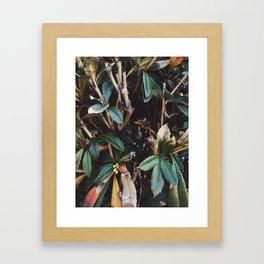 Aesthetic Leaves Framed Art Print