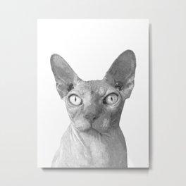 Black and White Sphynx Cat Metal Print