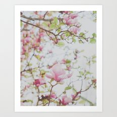 Magnolia Stories Art Print