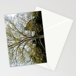 Great Oak at Winged Deer Park Stationery Cards