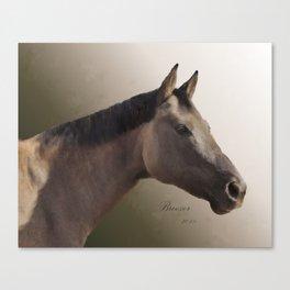 Celebrating Breezer; Horse Portrait Canvas Print