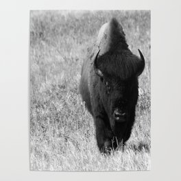 Bison - Monochrom Poster