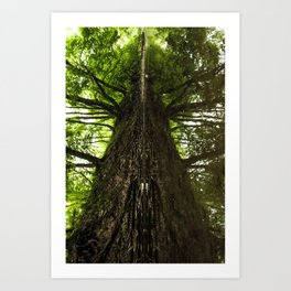 Creekside Reflection Art Print