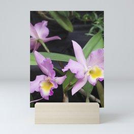 Cattleya Horace Maxima Orchid Mini Art Print