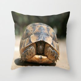 Young Spur Thighed Tortoise Looking Out of Its Shell Throw Pillow