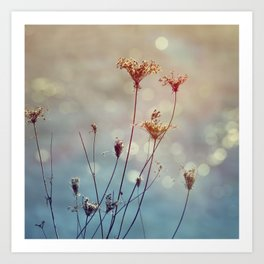 Soft Queen Anne's Lace and Bokeh Art Print