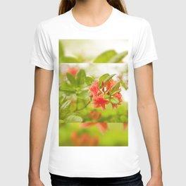 Azalea Il Tasso flowers red T-shirt