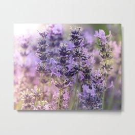 Fresh Lavender Metal Print