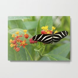 butterfly snack Metal Print