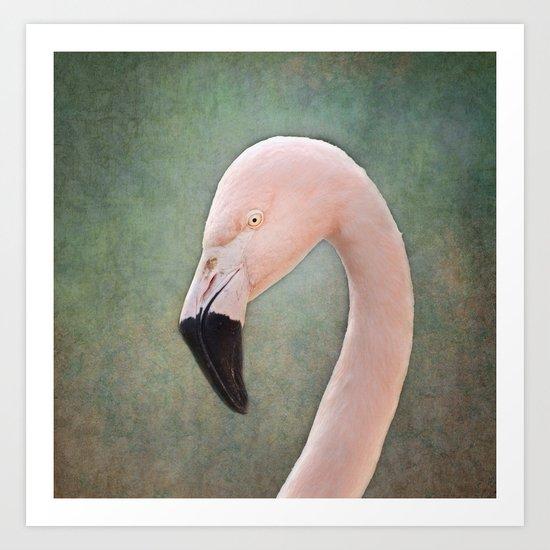 The solitary Flamingo Art Print