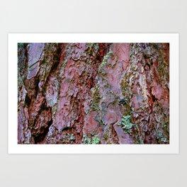 pine tree bark texture Art Print