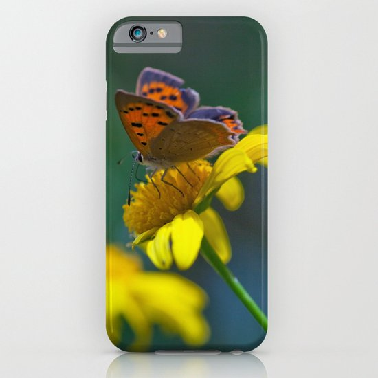 Butterfly on yellow flower - lycaena phloeas 3497 iPhone & iPod Case