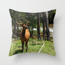 Rocky Mountain Wapiti Throw Pillow