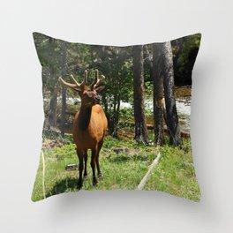 Rocky Mountain Wapiti Throw Pillow