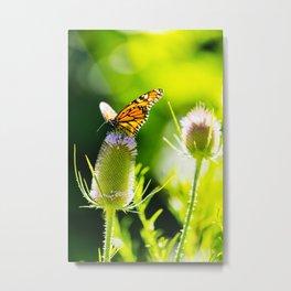 Monarch Butterly Metal Print