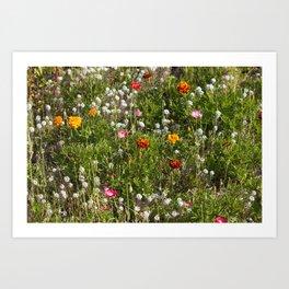 Field of Wild Flowers Art Print