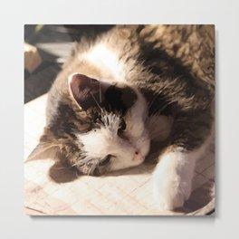 Sleeping Cat Illustration Metal Print