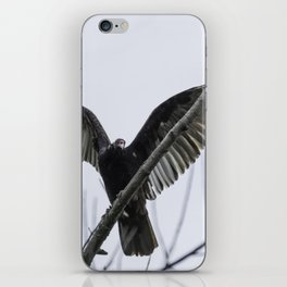 Turkey Vulture iPhone Skin