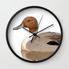 Reflections of a Northern Pintail Duck Wall Clock