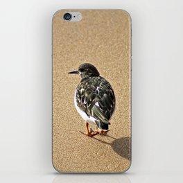 Sandpiper Bird Seashore Portrait iPhone Skin