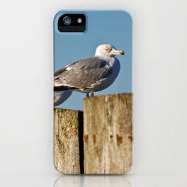Seagulls on groynes iPhone Case