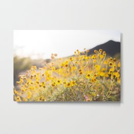 Arizona Wildflowers Metal Print