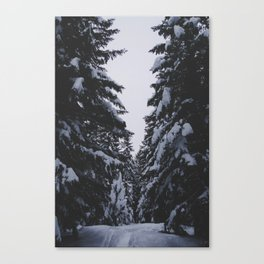 Dark Evergreen Snow Forest (Color) Canvas Print
