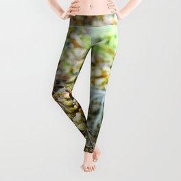 Seaweed Series 3 Leggings