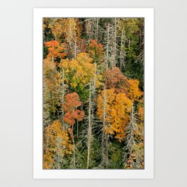 Oh, the Hemlocks! * Linville Gorge * B4 the Table Rock fire  Art Print